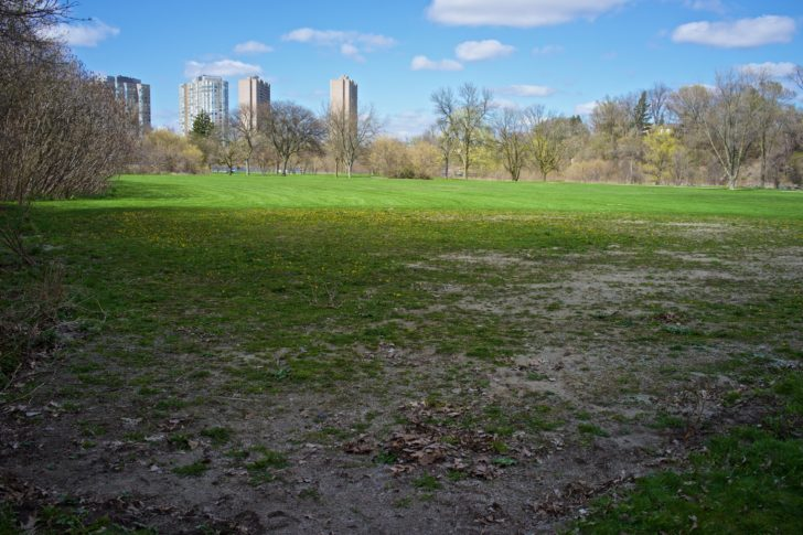 Looking north from the proposed leash free zone.