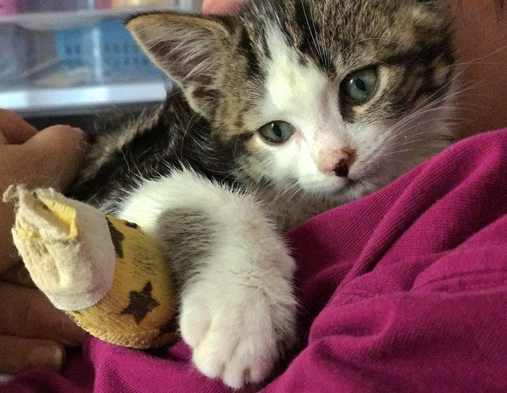 Cats Keep Setting Off Nest Alarm